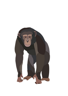 H_chimp_Maysore.png