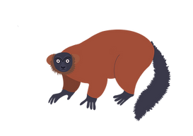 red lemur.png