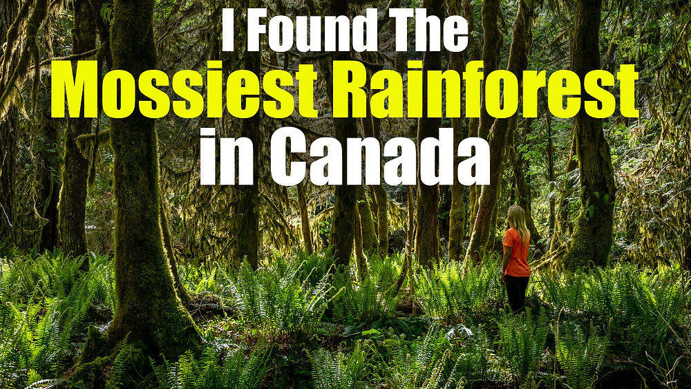 The mossiest rainforest in Canada