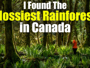 I found the mossiest rainforest in Canada