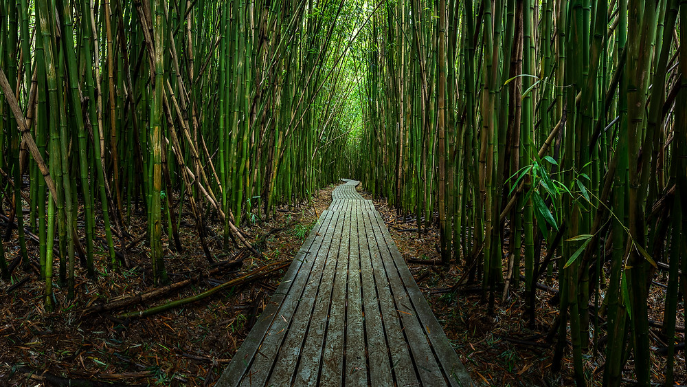 bamboo forest HDR panorama