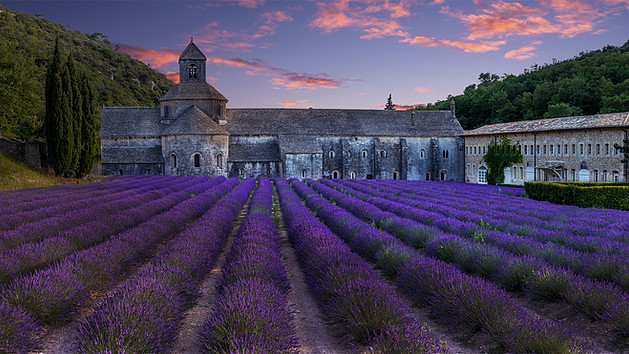 Lavendar Field Senanque Abbey France