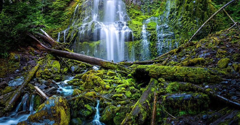 Whispering Green - by Tim Shields