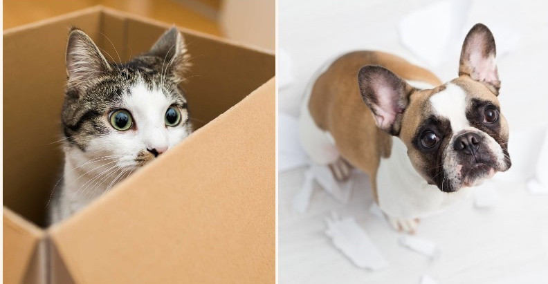 Difference between cat's and dog's love for cardboard