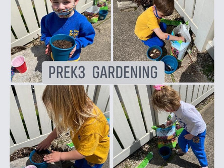 Pre-K 3 Was Busy in the Garden