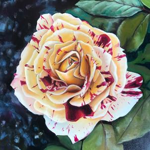 Splattered Rose