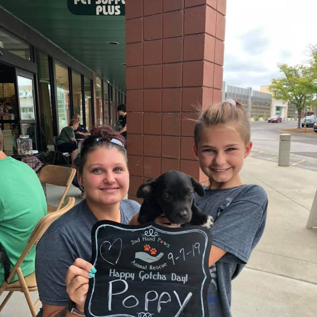 Poppy was adopted 9-7-19