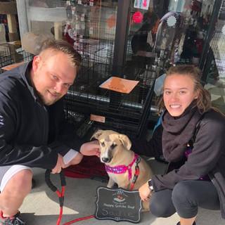 Sadie (Basil) was adopted 11-2-19