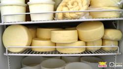 Curso de queijo outubro de 2015