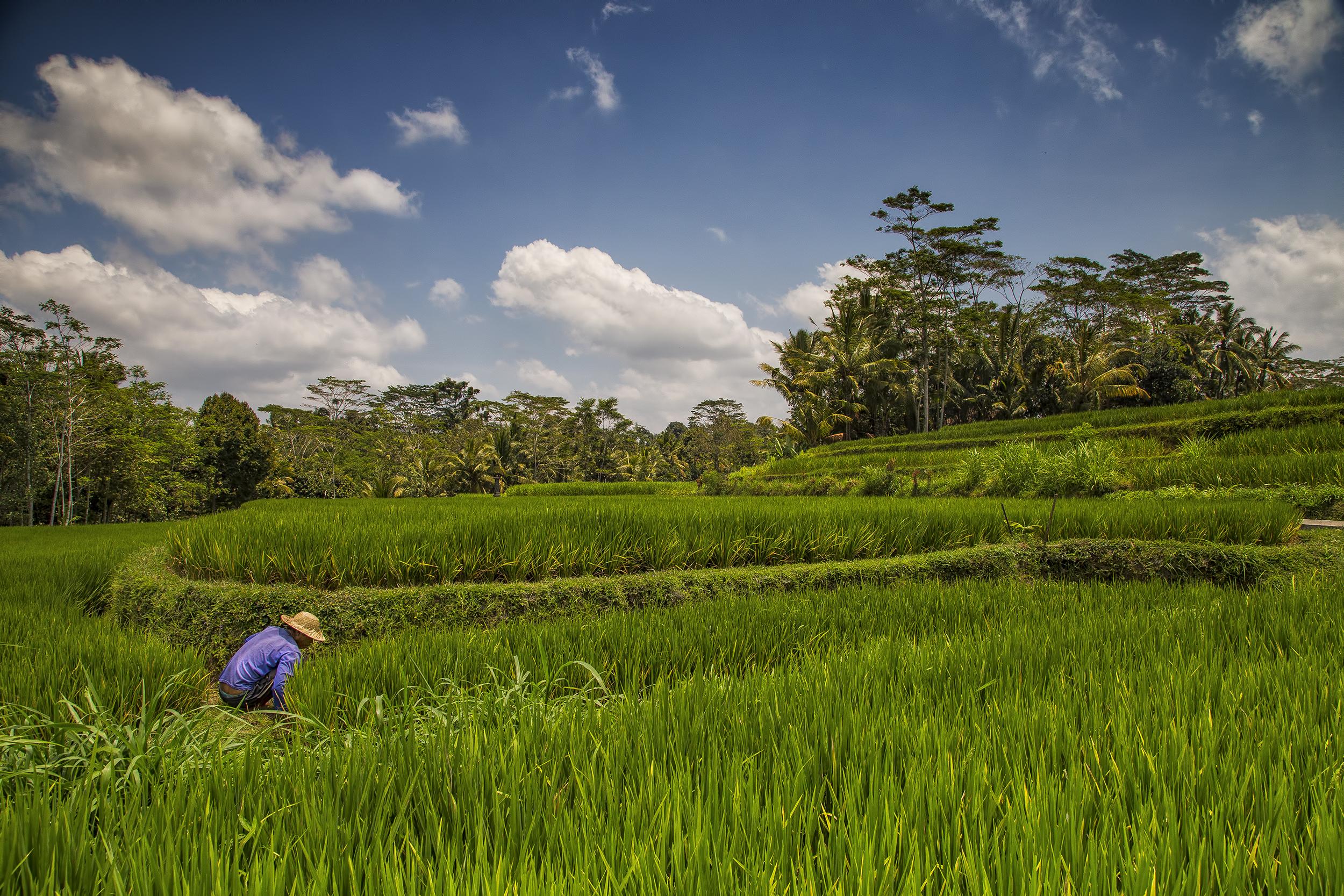 Ubud, Bali Island
