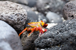 Galápagos - Ec