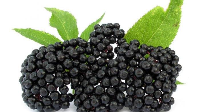 organic elderberry | 2oz