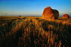 Harvest in Nemaha County