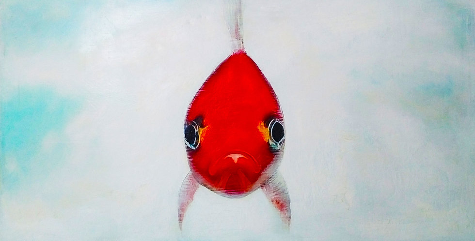 """Don't be a Gold Fish 48"""" x 24"""""""