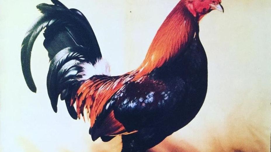 King Kurt – Big Cock