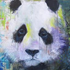 Modjo panda
