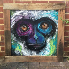This Silvery Gibbon is about to go to hi
