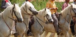 Gardians & Horses
