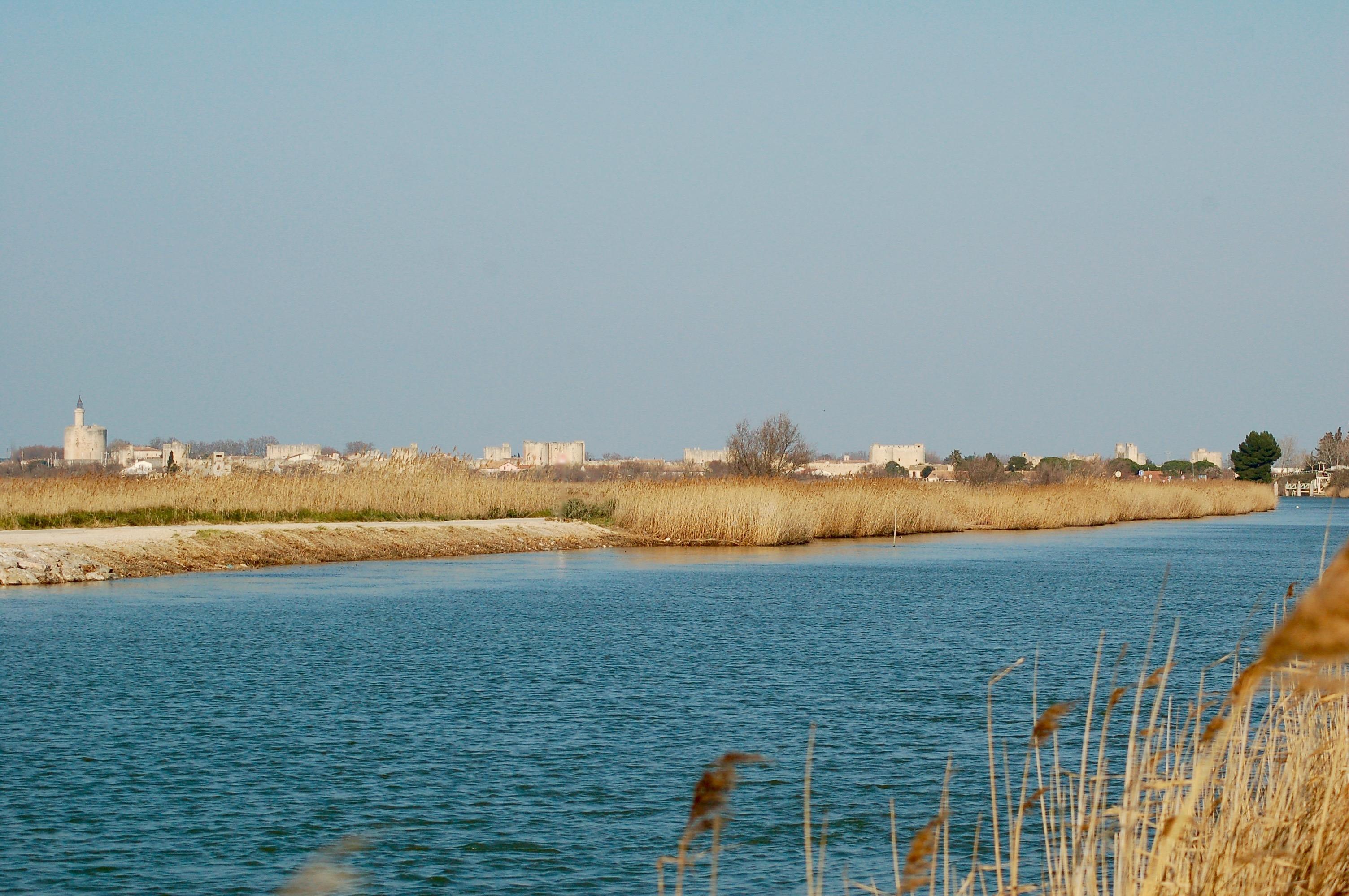 Wetland Camargue
