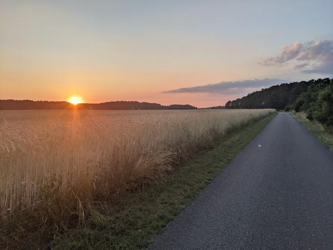 Wald und Weizenfeld im Sonnenuntergang