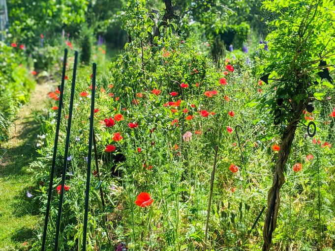Garten mit Mohnblumen
