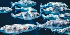 A school of fish