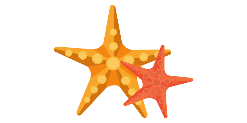 two starfish
