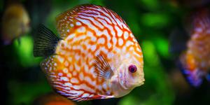 fish photo
