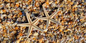 starfish shells beach