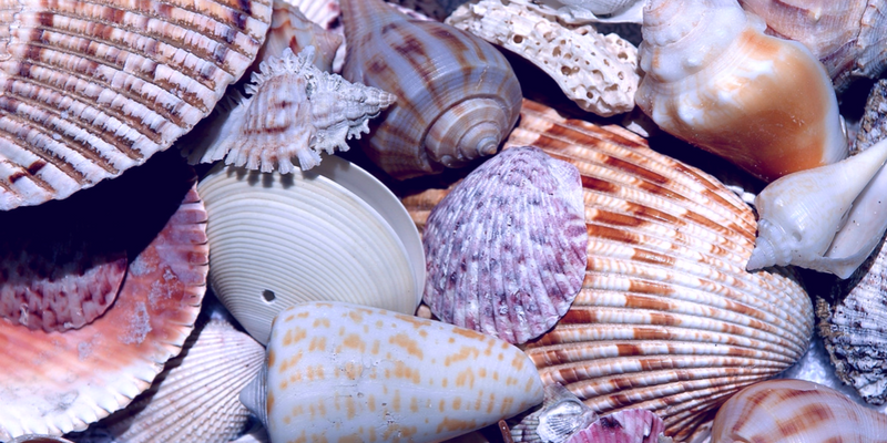 assorted pretty shells