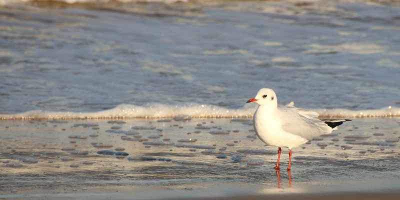 seagull on the beach photo