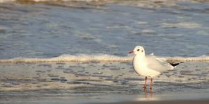 seagull on the beach photo