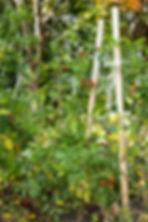 jardin_centrefam-52.JPG