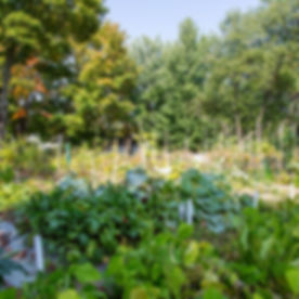 jardin_centrefam-43.JPG