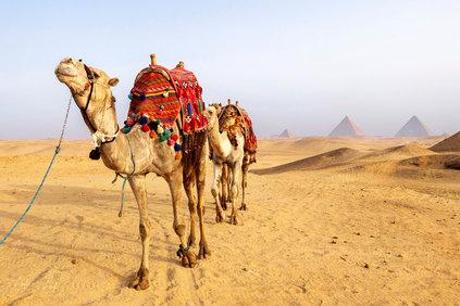 0118_CAIRO_ASWAN.jpg