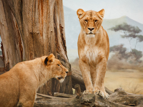 Wildlife Population Recovery
