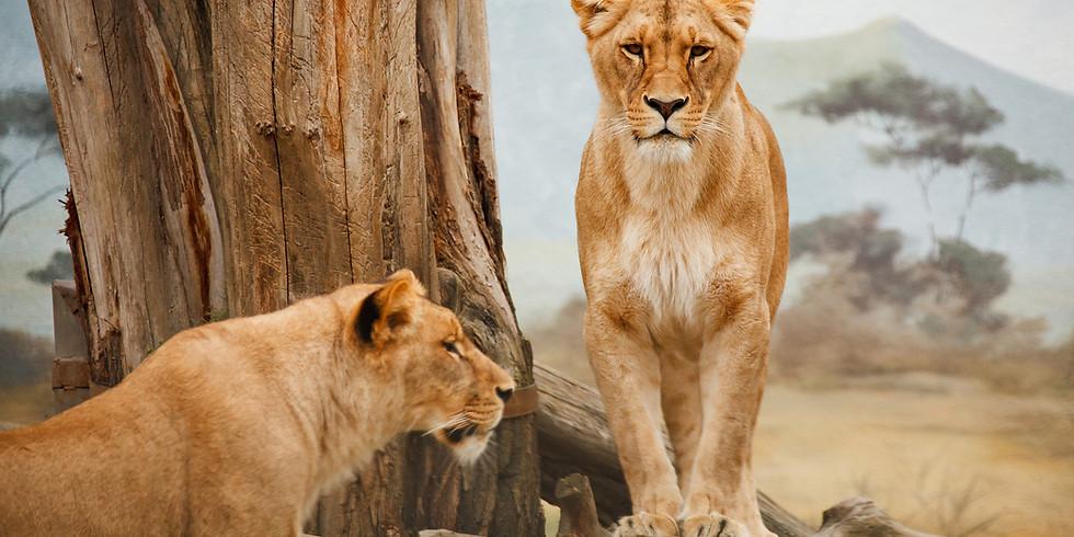 Masai Mara Experience Nov 2022