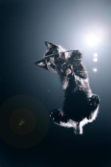 Wednesday-Kitten-Glass-Brendan-Mariani-P