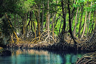 mangroves-island-hopping-philippines.jpe