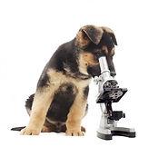 солнцево ветеринар