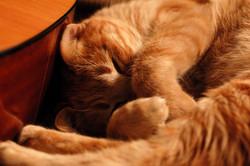 החתול שלי ישן ליד הגיטרה