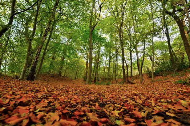 Forest in autum fall foliage indian summer