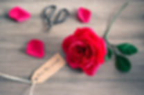 Wild Hive Paper Flowers - Single Rose