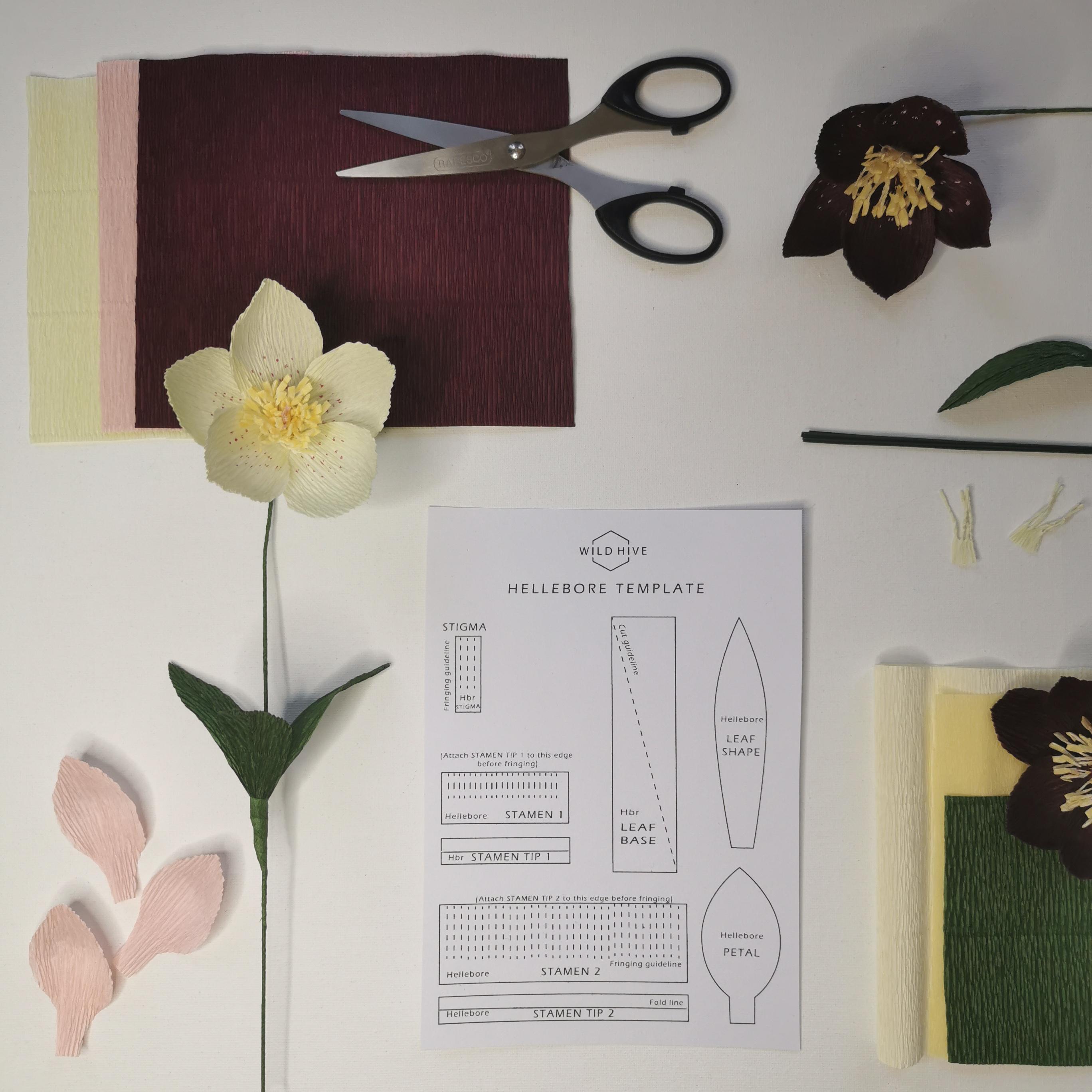 Paper Hellebore Kit
