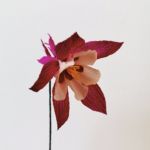 Paper Aquilegia 13th, 14th or 16th May