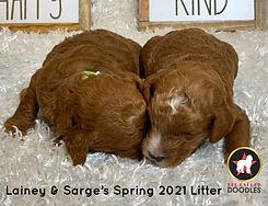 Lainey's SP21 Litter (4).jpg