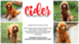 Cider.collage.jpg