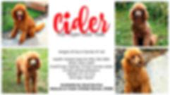 Cider.collage.jpg