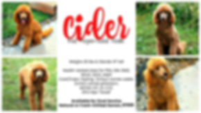 Cider.collage 1500.jpg