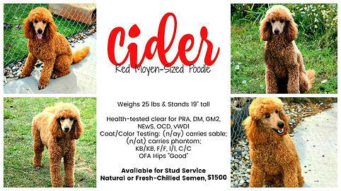 Cider.collage 1500.jpg
